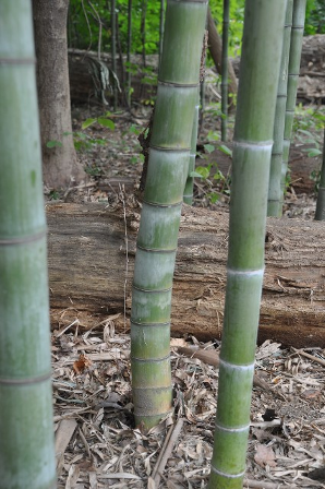 CC Bamboo is the leader in bamboo installation management